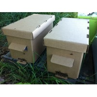 Ontario Nucs (Approx. June 14-30) (Waiting List - No Advance Payment Required)